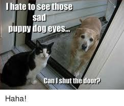 Puppy Eyes Meme - puppy dog eyes meme pets wallpapers