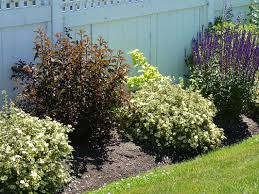 new england native plants high impact native american shrubs ecological landscape alliance