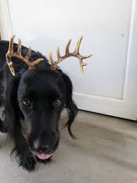 Deer Antlers Halloween Costume Maxrax Tm Pet Costumedeer Antler Head Dress Dog