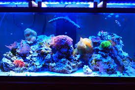 led reef aquarium lighting on pwm led dimming for reef aquariums coralux