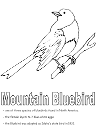mountain bluebird coloring