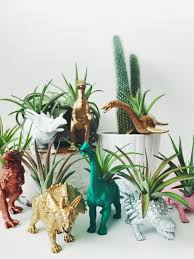 customize your own dinosaur planter with air plant home decor