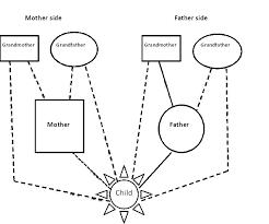 kinship diagram template figure 2 language modulates brain