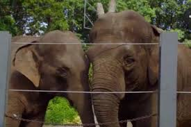 bored at home create your own zoo the zoo it s grooming time for the elephants exclusive video
