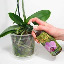 orchids care caring for orchids