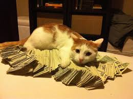 Working Cat Meme - all singles stripper cat is working her way through college