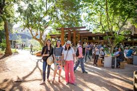 company gardens cape town south africa brunch or lunch for