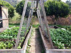 mavis mail amazing garden photos from central florida bean