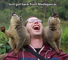 penguin madagascar funny gifs reaction meme funny
