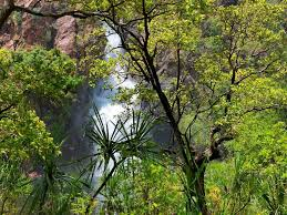 monsoon and dry rainforests steve parish nature connect