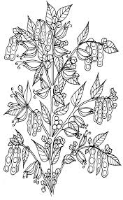 holly hobbie coloring pages 413 best coloring pages to print flowers images on pinterest