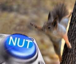 Squirrel Nuts Meme - squirrel nut nut button know your meme