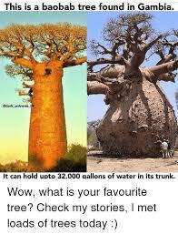 Tree Trunks Meme - 25 best memes about baobab baobab memes