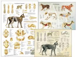 Internal Dog Anatomy Veterinary Anatomical Charts And Posters