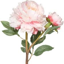 Faux Peonies Flowers 4 Very Light Pink Polyvore