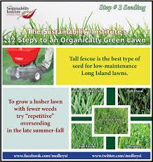 Alternatives To Grass In Backyard by Molloy College Step 3 Is Bluegrass Fescue Or Ryegrass Best For