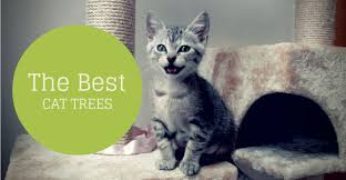 10 best cat tree reviews 2017 for big cats condos furniture guide