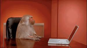 Baboon Meme - boardroom baboon office meme creators interview complex