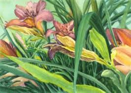 Day Lillies Drawing Archives Art Alliance Gallery Downtown