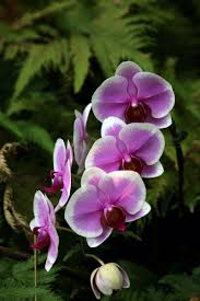 Hilo Flowers - hawaii tropical botanical garden hilo hawaii u2013 dan330