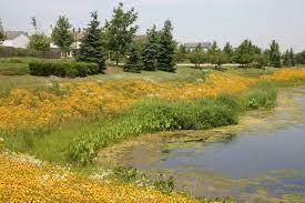 native plants to illinois native plant buffer riparian buffer lake county il