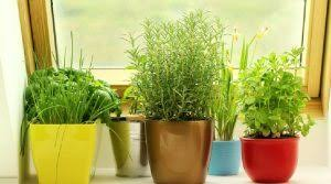 Green Plants Fight Air Pollution With Green Indoor Plants The Statesman