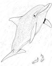 dolphin clipart baiji pencil and in color dolphin clipart baiji