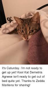 Get Out Of Bed Meme 25 Best Memes About Caturday Caturday Memes