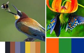 Colour Combination With Blue 33 Orange Color Schemes Inspiring Ideas For Modern Interior