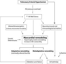 right heart adaptation to pulmonary arterial hypertension jacc
