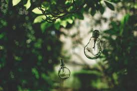 free photo light bulb nature tree green free image on