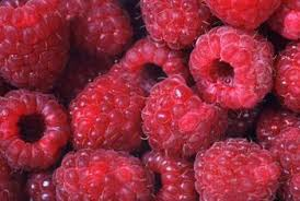can you grow a raspberry tree in a home guides sf gate