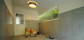 chambre pour chien logements de la pension chien le bois du roy