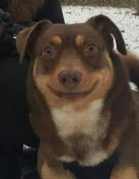 Smiling Dog Meme - creepy smiling dog meme mne vse pohuj