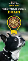 best 25 pro plan dog food ideas on pinterest dog food storage