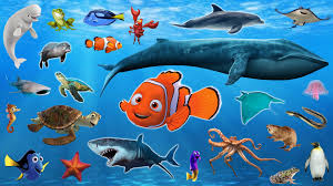 learn sea animals water animals names and sounds drulii tv for
