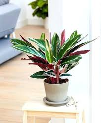 best light for plants low light houseplants low light indoor plants that are easy to grow