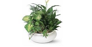 funeral plants plants floor plants