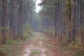 Georgia forest images Ga southern forests face multiple threats georgia public jpg