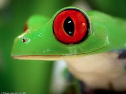 eyed tree frog contact lenses contact lens free shipping