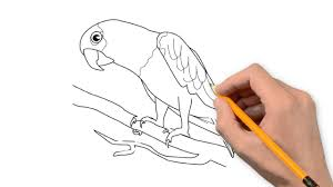 parrot animals pencil to draw step by step youtube