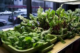 garden how to grow vegetables indoors using minimalist design