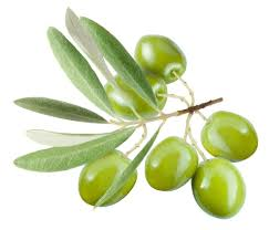 the meaning and symbolism of the word olive
