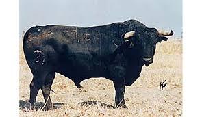 genealogía del toro de lidia español u2039 granada costa