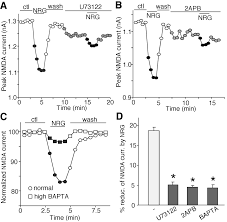 regulation of nmda receptors by neuregulin signaling in prefrontal