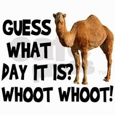 Hump Day Camel Meme - 319 best hump day images on pinterest hump day humor wednesday