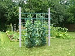 Bamboo Cucumber Trellis Cheap Wire Cucumber Trellis Find Wire Cucumber Trellis Deals On