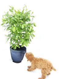 revolutionary viva plant net prevents children pets from