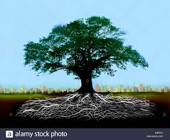 tree with roots below ground with distant city skyline stock photo