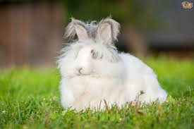 Air Conditioned Rabbit Hutch Caring For Your Rabbit During The Summer Pets4homes